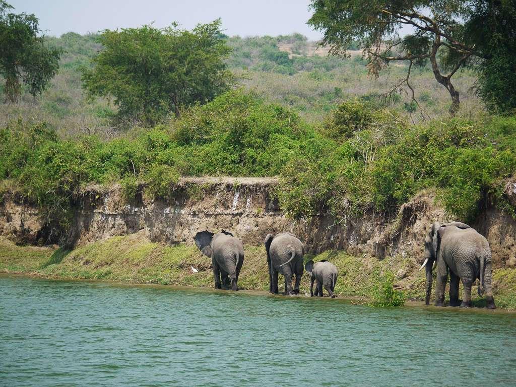 Elefantes en el Parque Nacional Queen Elizabeth, Uganda