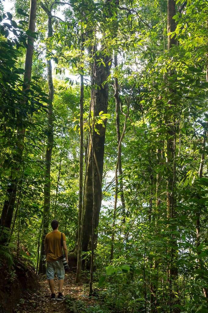 Árboles en los senderos de Tulemar, Manuel Antonio, Costa Rica