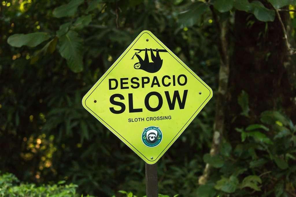 Señal reducir velocidad perezosos en Tulemar, Manuel Antonio, Costa Rica