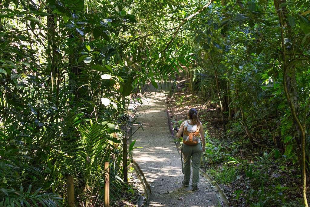 Sendero Congo Parque Nacional Manuel Antonio, Costa Rica