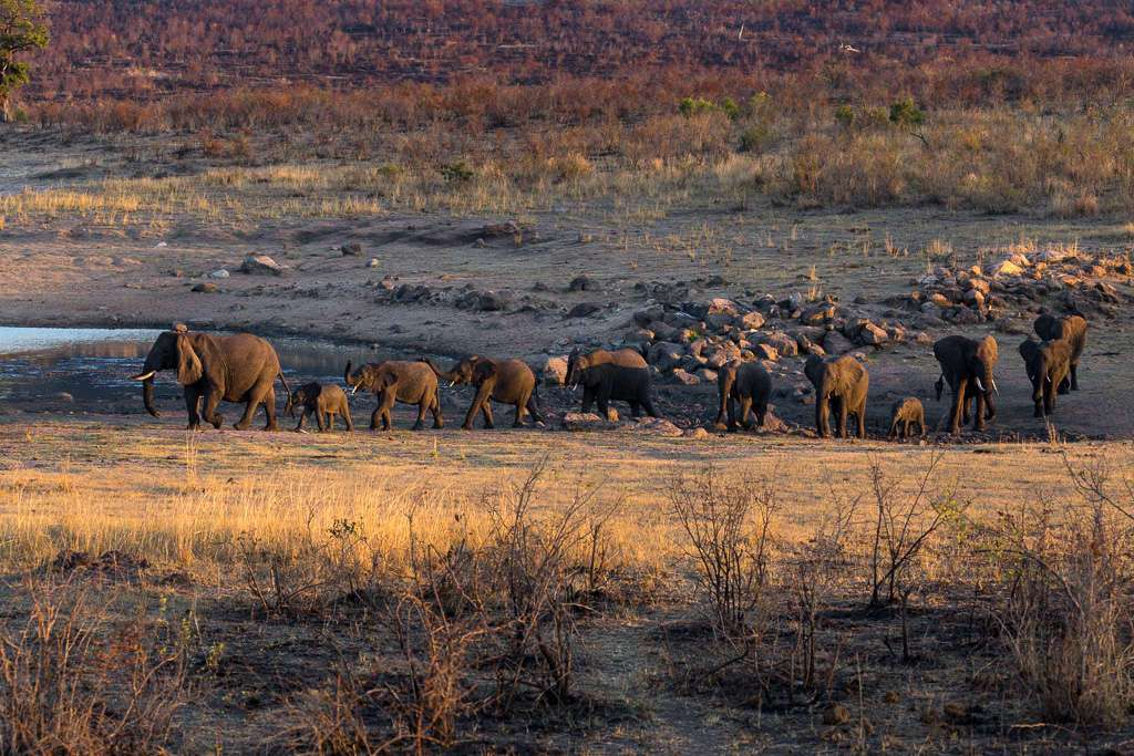 Manada de elefantes, Kruger, Sudáfrica