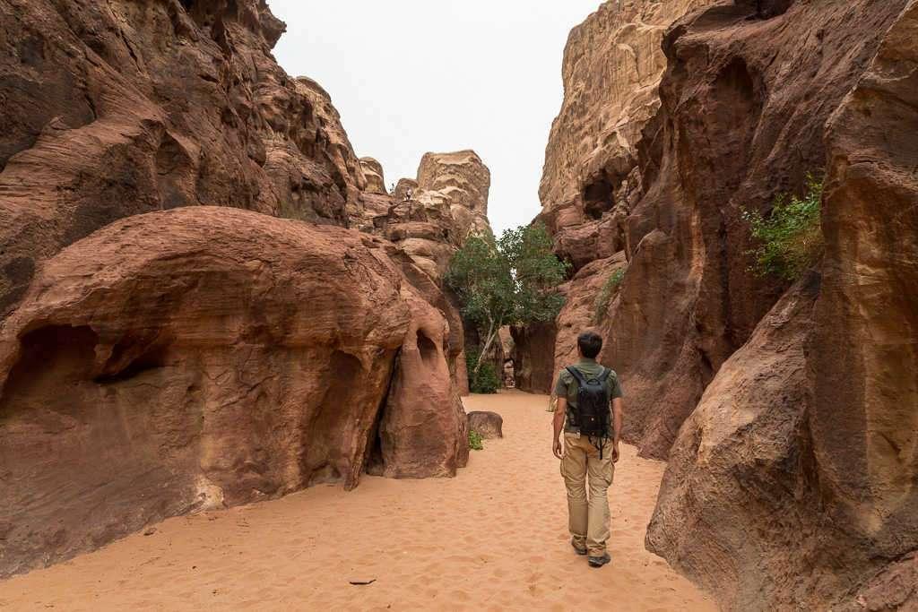 Vegetación en el desierto rojo, Wadi Rum, Jordania