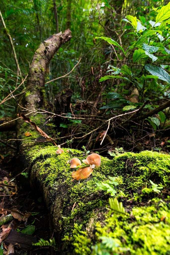 Musgo en el bosque nuboso de Monteverde, Costa Rica