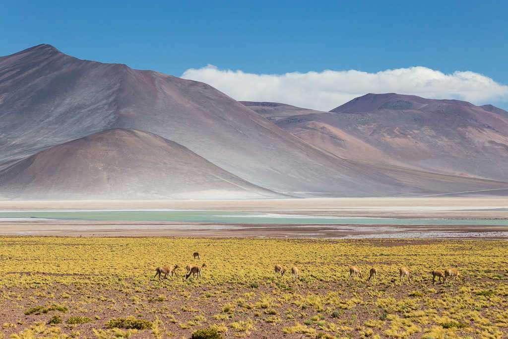 Piedras Rojas y Aguascalientes, Atacama, Chile