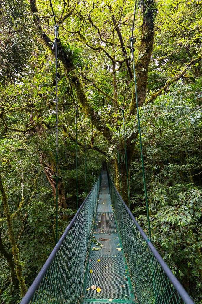Puente colgante entre los árboles en Monteverde, Costa Rica