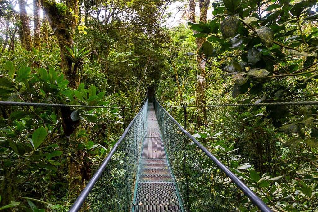 Puente colgante en el bosque nuboso de Monteverde, Costa Rica