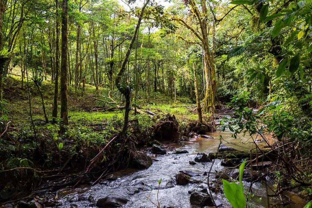 Río en el tour de puentes colgantes de Monteverde, Costa Rica