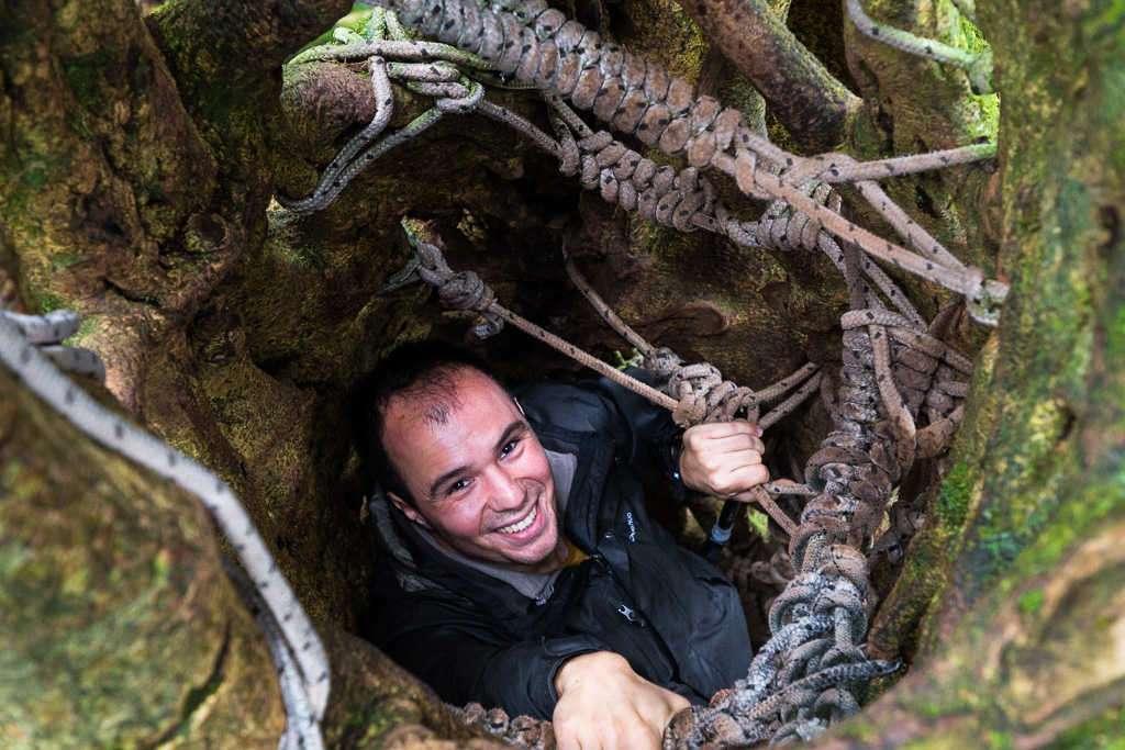 Trepando por el interior de un ficus en Monteverde, Costa Rica