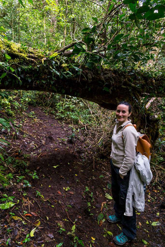 Tronco caído en un sendero del bosque nuboso del Cloud Forest Lodge de Monteverde, Costa Rica