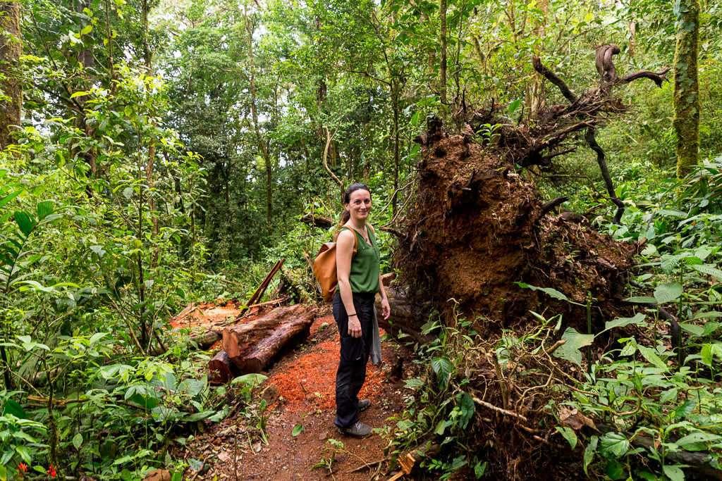 Árbol caído en los senderos del Heliconias Lodge, Bijagua, Costa Rica