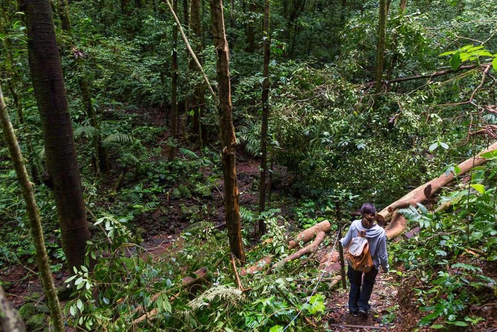 Senderos del Heliconias Lodge, Bijagua, Costa Rica