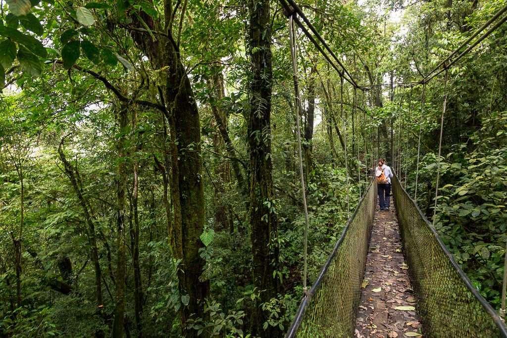 Puente colgante en los senderos del Heliconias Lodge, Bijagua, Costa Rica