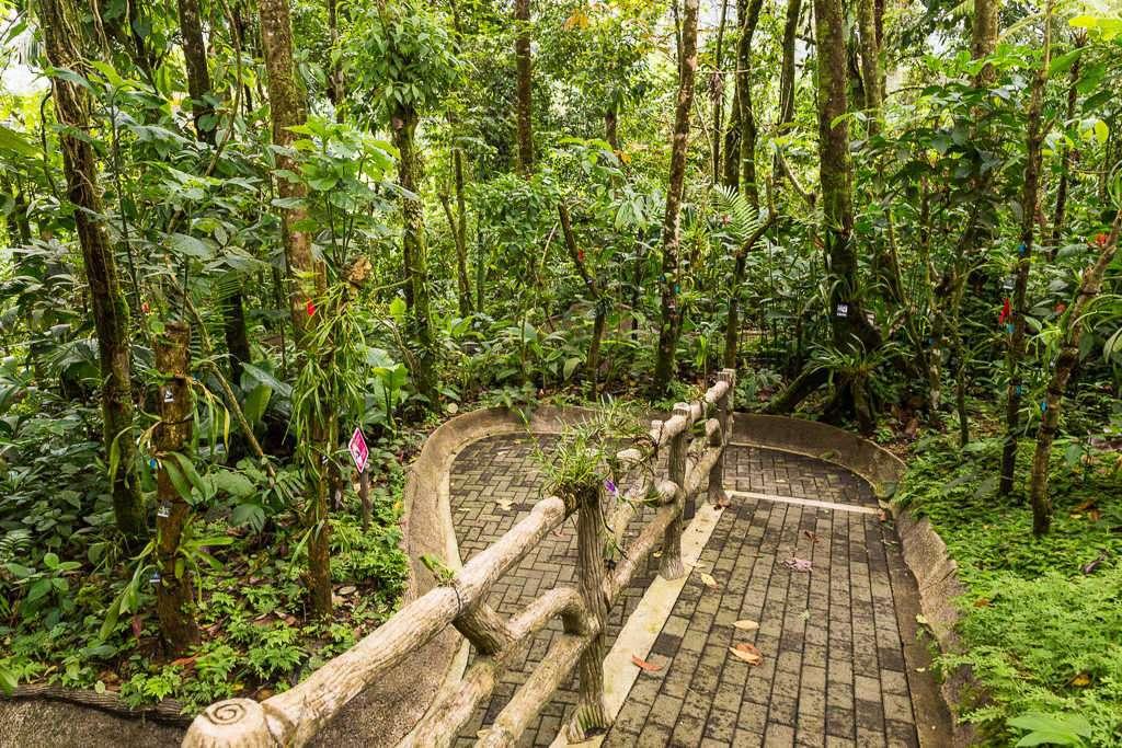 Camino de las orquídeas en la catarata La Fortuna, Arenal, Costa Rica