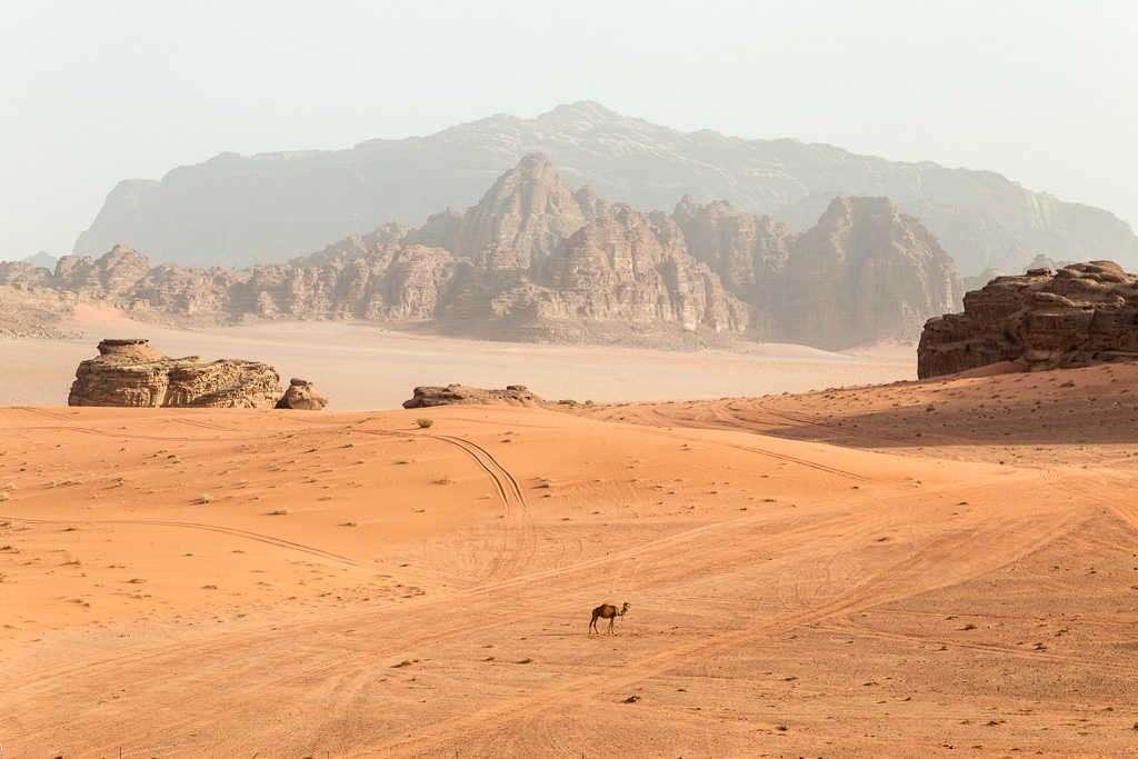 Camello y montañas de Wadi Rum, Jordania