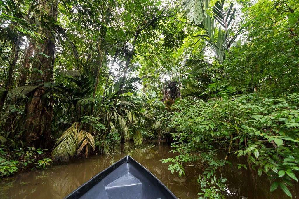 Canales estrechos del parque nacional Tortuguero, Costa Rica
