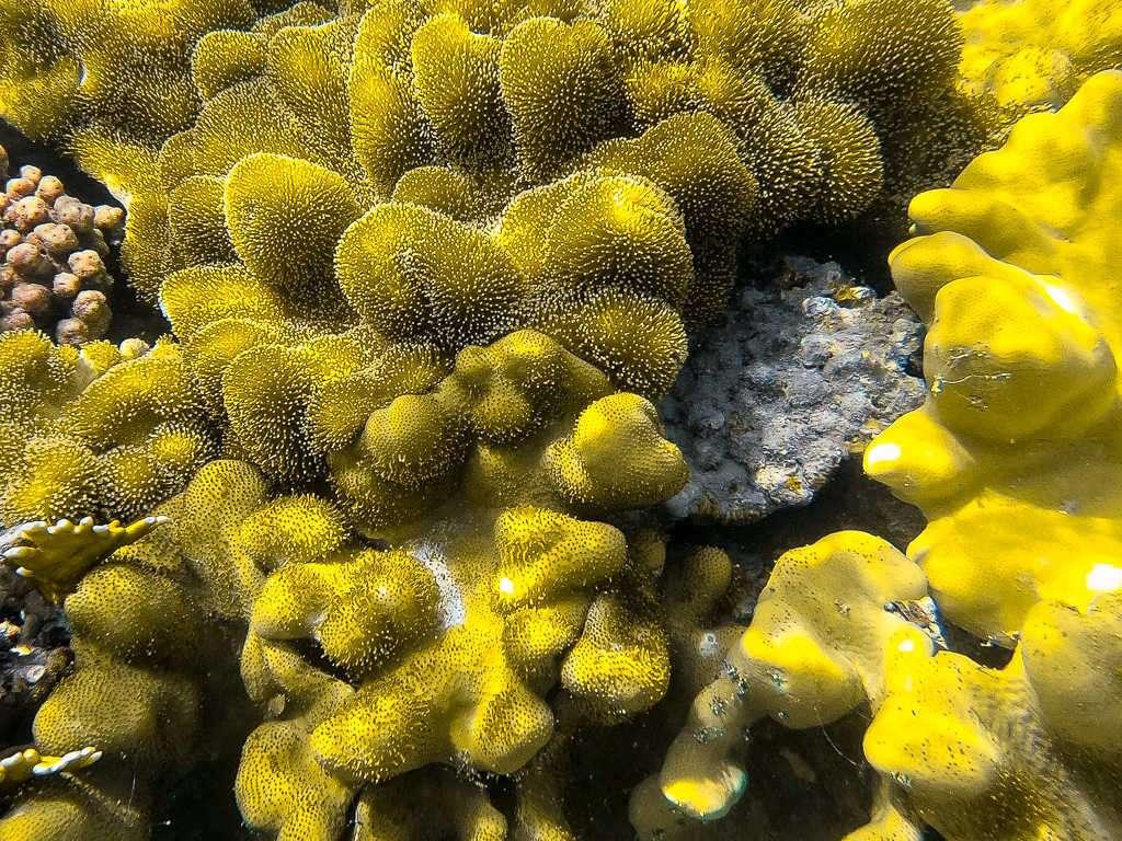 Corales muriéndose en el Japanese Garden en el mar Rojo, Aqaba, Jordania