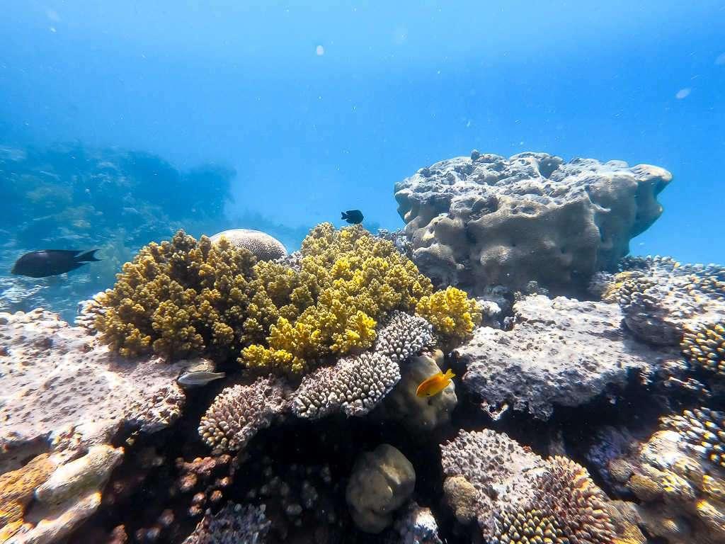 Corales y peces en el Japanese Garden en el mar Rojo, Aqaba, Jordania