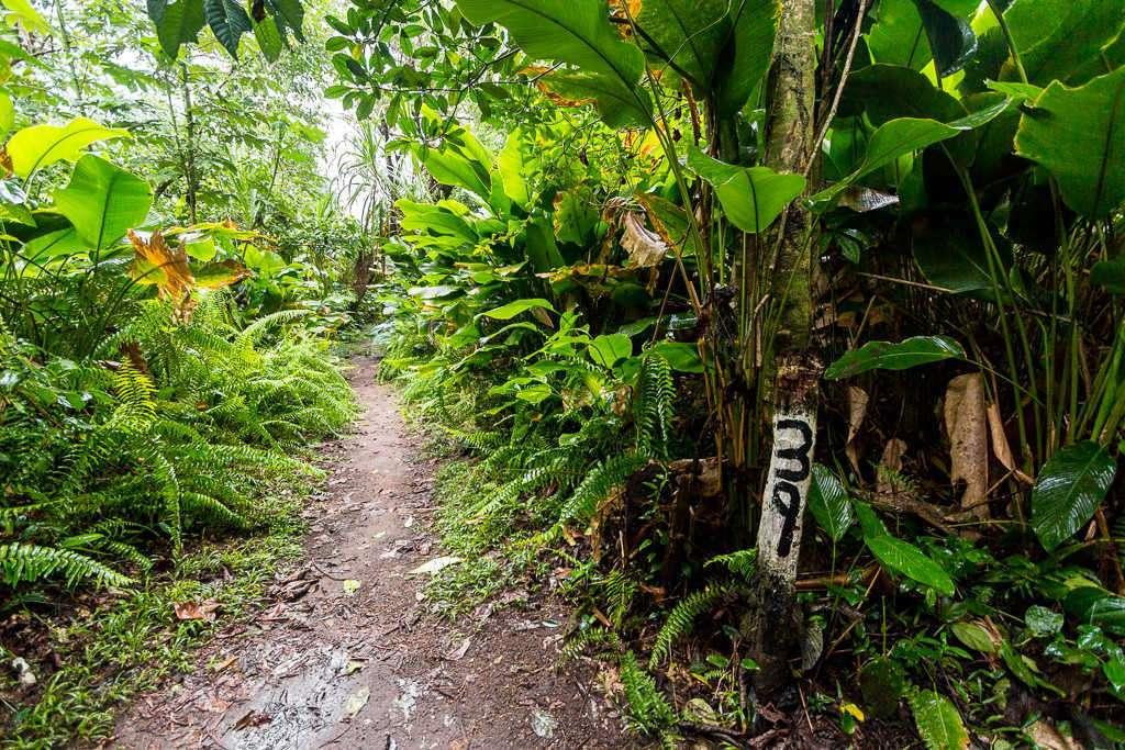 Entrada a la playa desde los senderos del parque nacional Tortuguero, Costa Rica