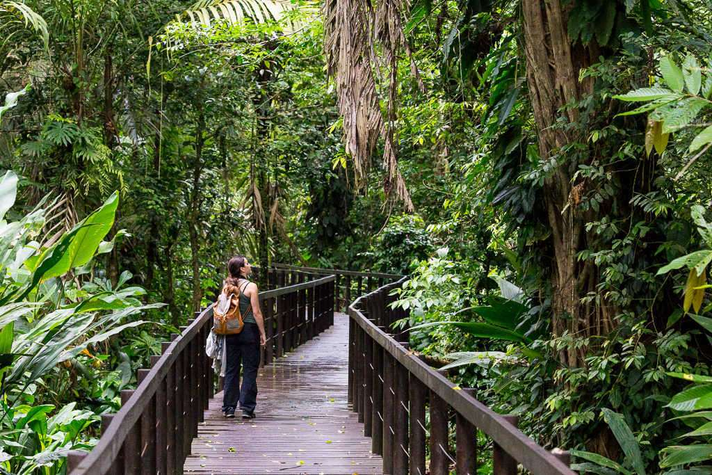 Plataforma elevada del sendero Los Cativos, parque nacional Cahuita, Costa Rica