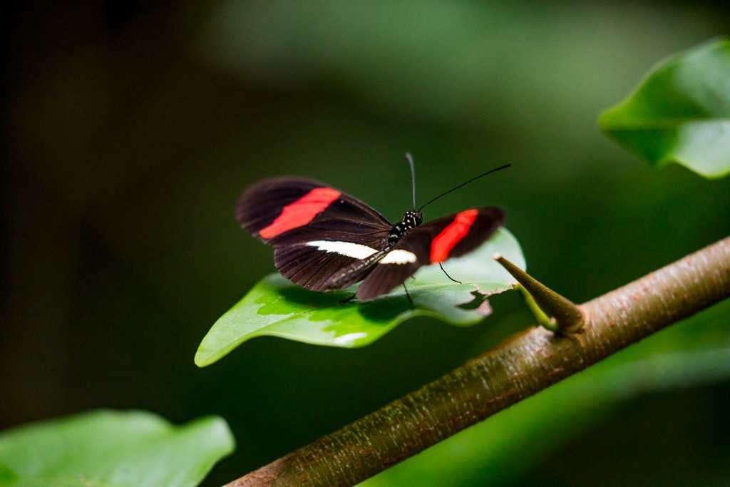 Mariposa en playa Blanca, parque nacional Cahuita, Costa Rica