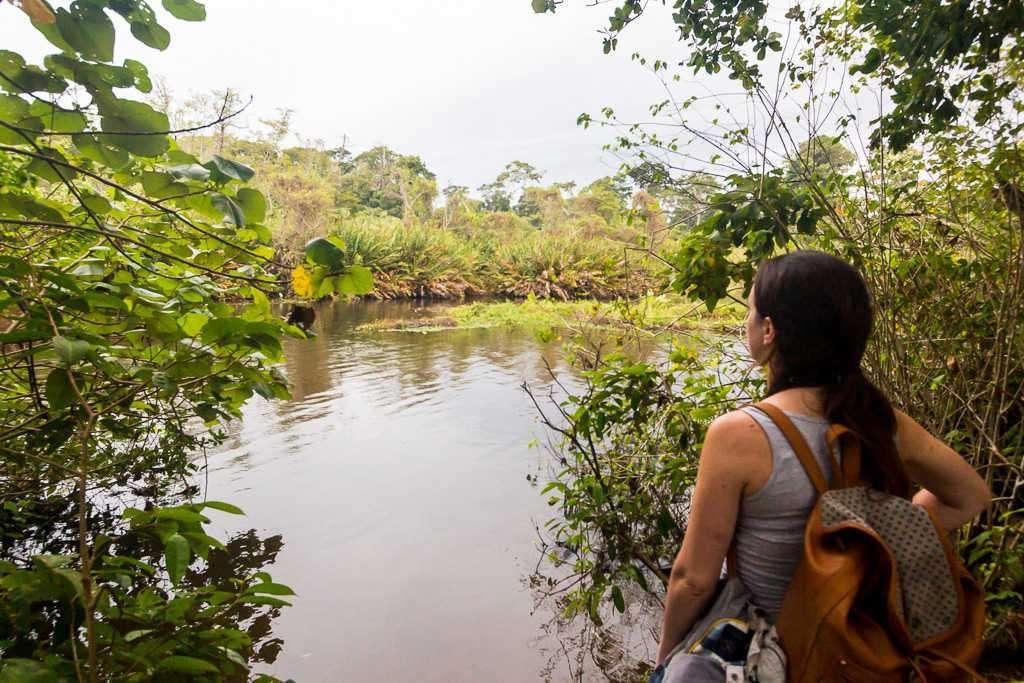 Río Suarez en el parque nacional Cahuita, Costa Rica