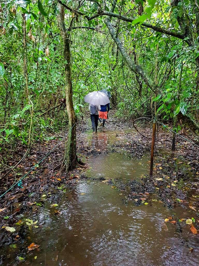 Sendero encharcado en el parque nacional Tortuguero, Costa Rica