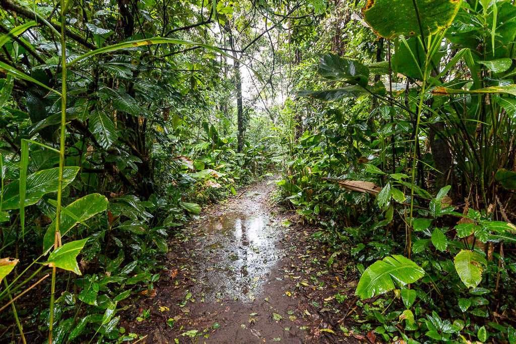 Sendero embarrado en el parque nacional Tortuguero, Costa Rica