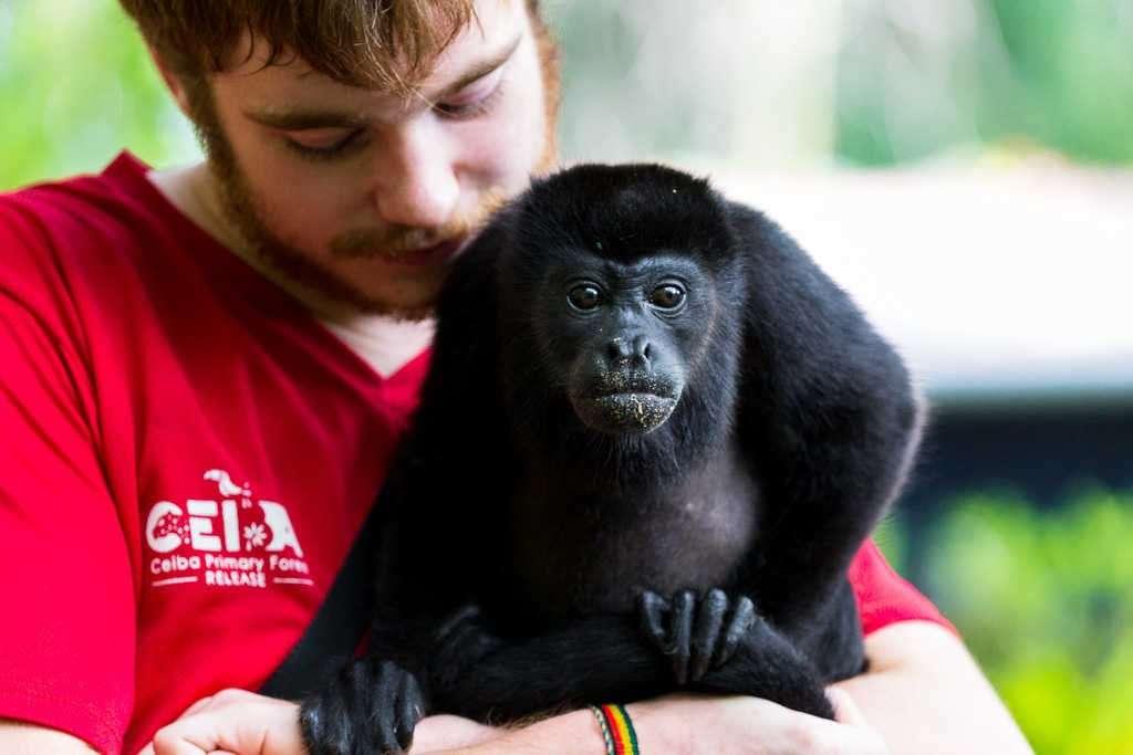 Mono aullador y su cuidador en el Centro de Rescate Jaguar, Cahuita, Costa Rica
