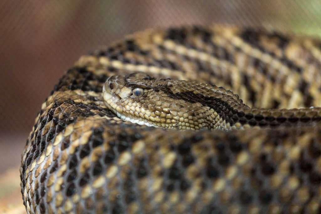 Serpiente en el Centro de Rescate Jaguar, Cahuita, Costa Rica